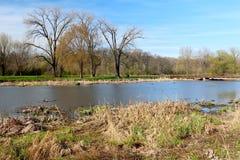 美好的春天视图在自然狂放的公园  一些反弹严格晴朗那里不是的蓝色云彩日由于域重点充分的绿色横向小的移动工厂显示天空是麦子白色风 免版税库存照片