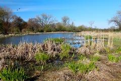 美好的春天视图在自然狂放的公园  一些反弹严格晴朗那里不是的蓝色云彩日由于域重点充分的绿色横向小的移动工厂显示天空是麦子白色风 库存图片