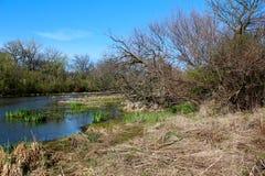 美好的春天视图在自然狂放的公园  免版税库存图片