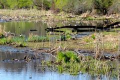 美好的春天视图在自然狂放的公园  免版税库存照片