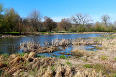 美好的春天视图在自然狂放的公园  库存照片