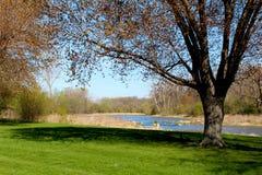 美好的春天视图在自然狂放的公园  免版税图库摄影