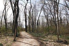 美好的春天风景在森林里 免版税库存照片