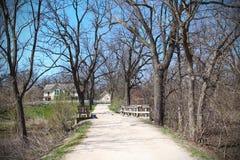 美好的春天风景在森林里 免版税库存图片