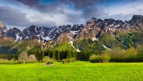 美好的春天风景在瑞士阿尔卑斯 免版税库存照片