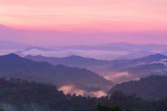 美好的暮色风景在雨林里。 免版税库存照片