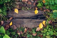 美好的木背景,一黄绿色秋天天本质上,在地面上的一个破裂的板条的叶子 纹理 图库摄影