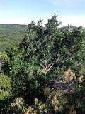 美好的本质 山和小山 树在风摇摆 不同的植物 混杂的森林和橡木森林 库存图片