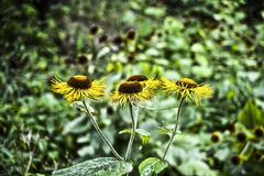 美好的束黄色花在森林波兰里 免版税库存图片