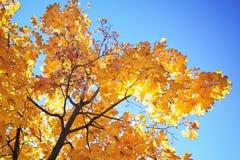 美好的树枝在秋季森林里 免版税图库摄影