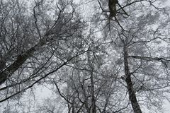 美好的树枝,立陶宛 图库摄影