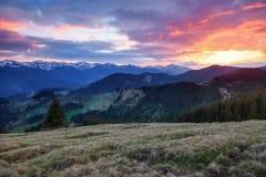 美好的桃红色日落亮光启迪与公平的树的美丽如画的风景 免版税库存图片