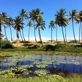美好的棕榈反射 图库摄影