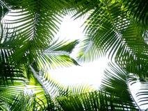 美好的棕榈叶背景 库存照片