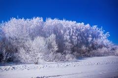 美好的森林冬天 库存照片
