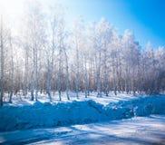 美好的森林冬天 免版税库存图片