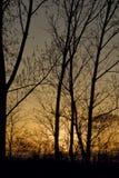 美好的森林日落 免版税库存照片