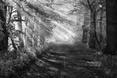 美好的森林早晨 免版税库存图片