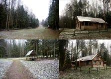 美好的森林横向冬天 安置木 库存图片