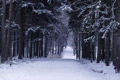美好的森林横向冬天 免版税库存照片