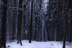 美好的森林横向冬天 库存照片