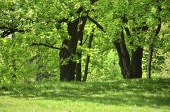 美好的森林横向 草坪在绿色春天森林里 图库摄影