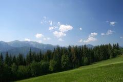 美好的森林草甸山景 免版税库存照片