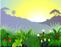 美好的森林视图 免版税库存照片