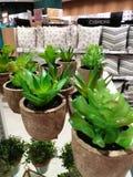 美好的植物显示 库存图片