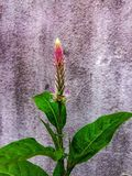 美好的植物群自然生活方式泰国 免版税库存照片