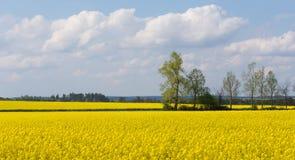 美好的横向农村春天 免版税图库摄影
