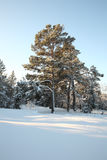 美好的横向冬天 免版税库存图片