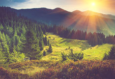美好的横向山夏天日出 免版税库存照片