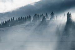 美好的横向山日出冬天 日出 与雾和雪的Carpatian谷 喀尔巴阡山脉的冬天山 早morni 免版税库存照片