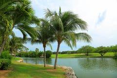 美好的横向本质 绿色领域、棕榈树、植物和湖浇灌 恶劣天气在途中 有风 阿鲁巴海岛 库存图片