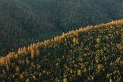 美好的横向本质 深绿色山日落 库存照片