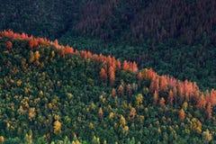 美好的横向本质 深绿色山日落 图库摄影