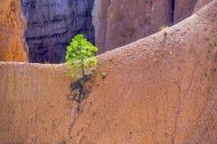 美好的横向详细资料在Bryce峡谷 库存图片