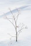 美好的横向雪冬天 免版税图库摄影