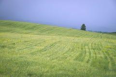 美好的横向 在蓝天的绿色夏天领域在雷暴前 免版税库存照片