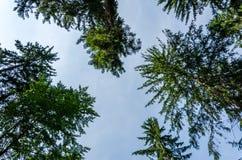 美好的横向 树冠反对天空的 免版税库存图片