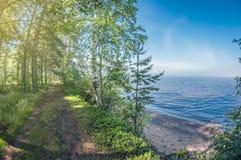 美好的横向 森林在海岸的土路沿湖 库存图片