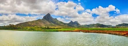 美好的横向 甘蔗和山的看法 Mauritiu 免版税库存图片