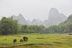 美好的横向Yangshuo 库存图片