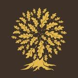 美好的橡树剪影集合 免版税库存图片