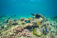 美好的水下的场面与海洋生物在阳光下在蓝色海 马尔代夫水下的天堂 免版税库存图片