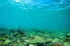 美好的水下的场面与海洋生物在阳光下在蓝色海 马尔代夫水下的天堂 库存照片