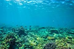 美好的水下的场面与海洋生物在阳光下在蓝色海 马尔代夫水下的天堂 图库摄影