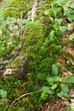 美好的水多的绿色宏观森林样式,自然地毯 库存照片