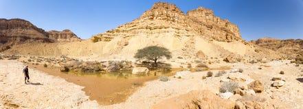 美好的沙漠绿洲春天湖全景视图 库存照片